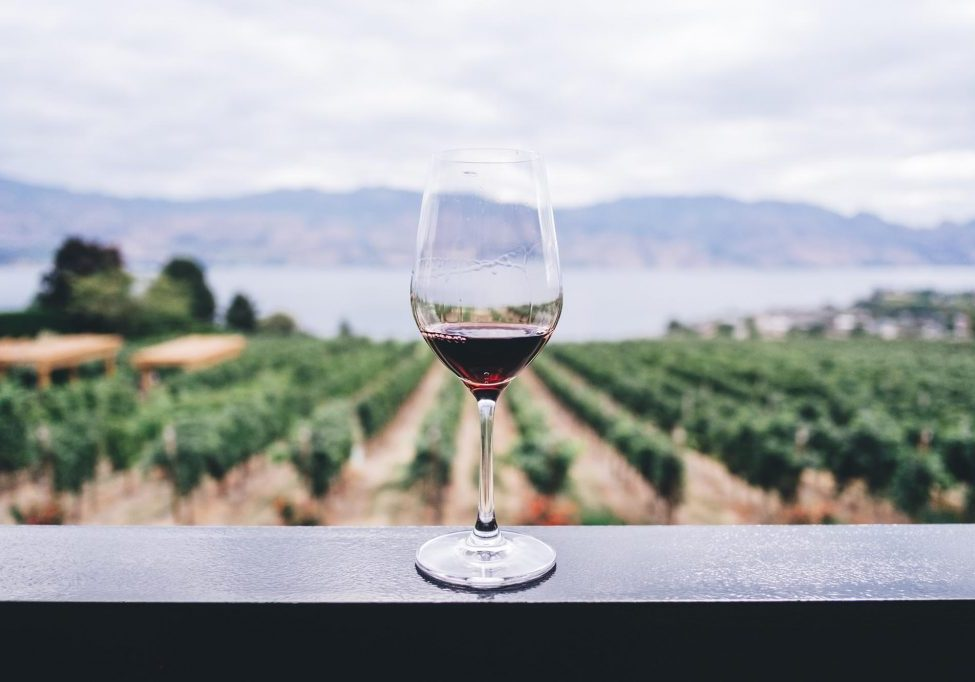 glass or red wine overlooking a coastal vineyard